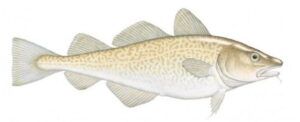 Bacalao del Pacífico Alaska seafood