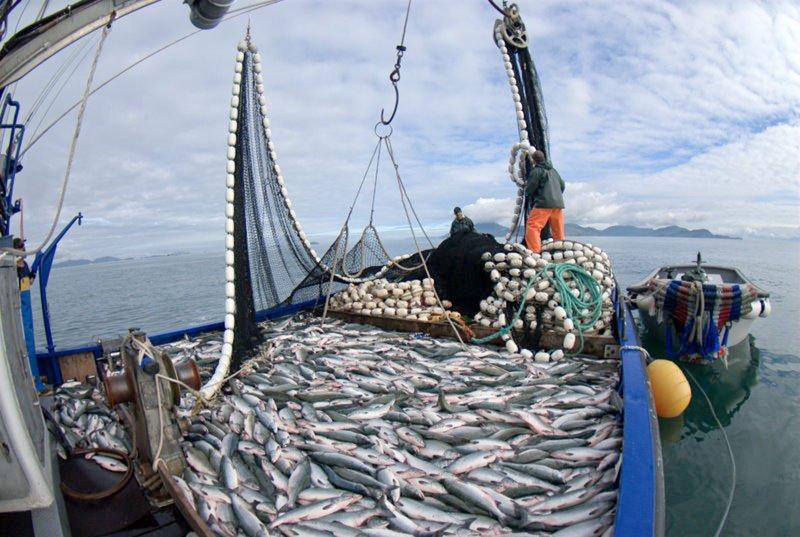 La pesca sobre el río tabol