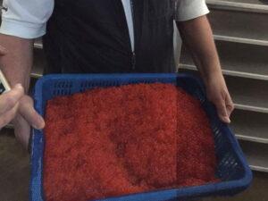 huevas de salmón limpias