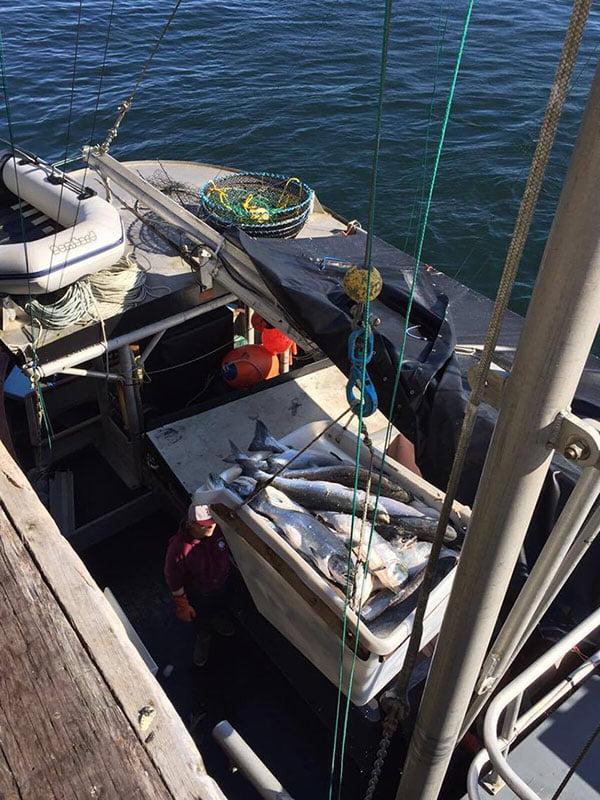 Salmón salvaje recién pescado
